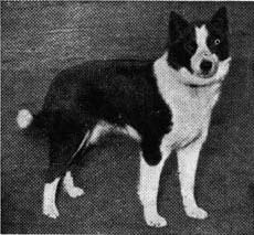 bella-cert-1955