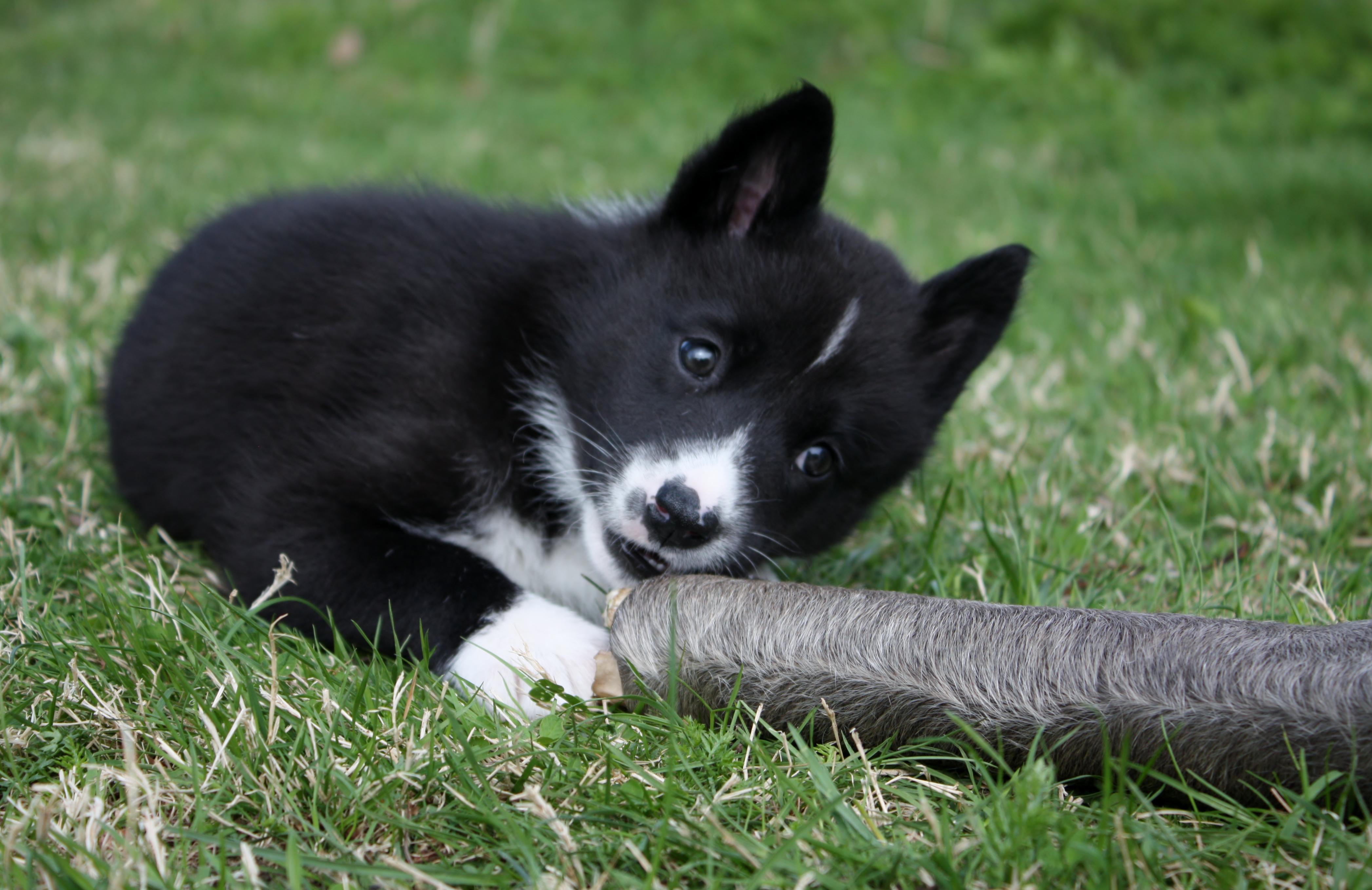 Täckhundslista uppdaterad